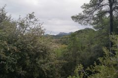 Bosques en las cercanías de Castellolí
