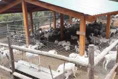 Corral del cabrero en las inmediaciones de la barraca del Varela