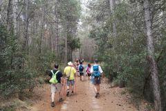 Hacia el llac de Formigosa por la pista forestal