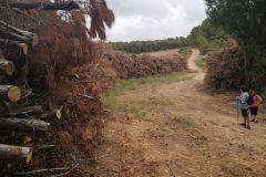 Pasando los árboles talados, seguiremos por la pista principal, obviando el camino a la izquierda y pasaremos por un depósito